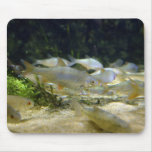 Freshwater Silver Fish Mousepad