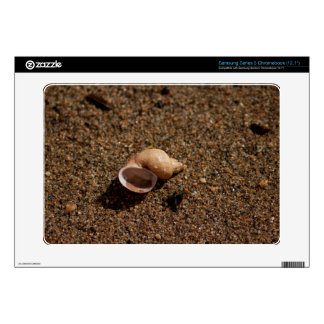 Freshwater Snail Shell Samsung Chromebook Decals