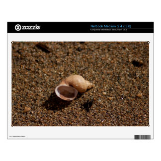 Freshwater Snail Shell Medium Netbook Decals