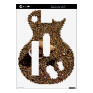 Freshwater Snail Shell Decal For Guitar Hero