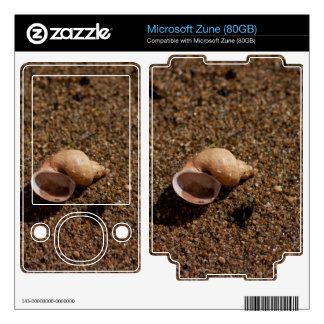 Freshwater Snail Shell Zune Decal