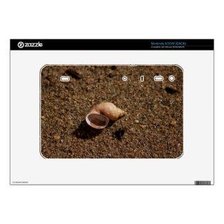 Freshwater Snail Shell Motorola XOOM Decals