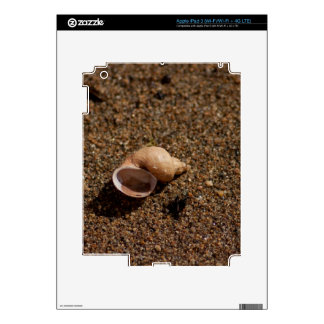 Freshwater Snail Shell Skins For iPad 3