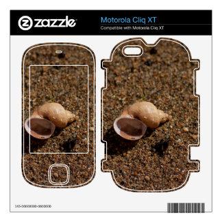 Freshwater Snail Shell Skin For Motorola Cliq XT