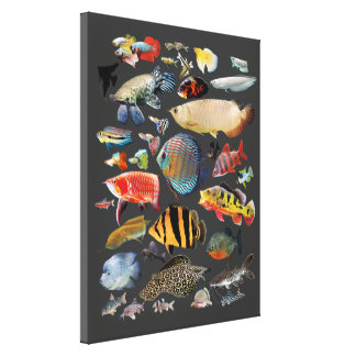Freshwater Tropical Fish Canvas Print