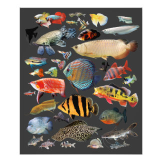 Freshwater Tropical fish Photo Print