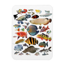 Freshwater Tropical Fishes Magnet