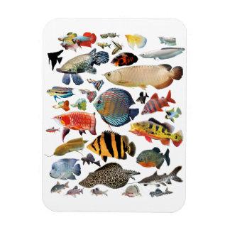 Freshwater Tropical Fishes Rectangular Photo Magnet