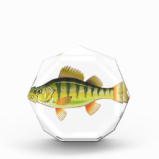 Freshwater Yellow Perch Vector Art graphic design Acrylic Award