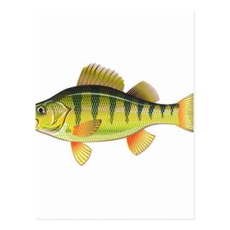 Freshwater Yellow Perch Vector Art graphic design Postcard