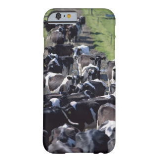 Fresian Dairy Cows, Awaiting Milking, Co Laois, Barely There iPhone 6 Case