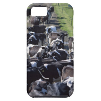 Fresian Dairy Cows, Awaiting Milking, Co Laois, iPhone SE/5/5s Case