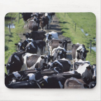 Fresian Dairy Cows, Awaiting Milking, Co Laois, Mouse Pad