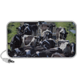 Fresian Dairy Cows, Awaiting Milking, Co Laois, Mini Speakers