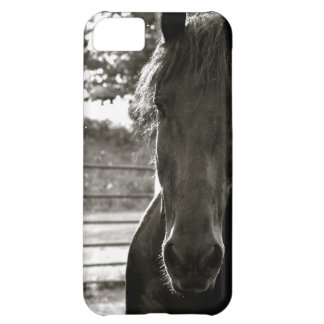 Fresian Horse IPhone Case iPhone 5C Cover
