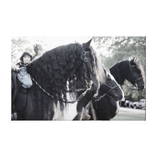 Fresian, Horses Canvas Print