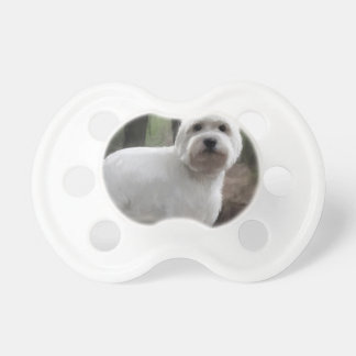 Friday, a westie pacifier