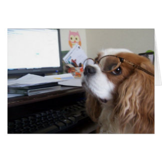 Friday Cavalier King Charles Spaniel at the office Cards