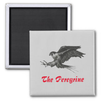 Fridge Magnet Peregrine Hawk pen and ink Drawing 2 Inch Square Magnet