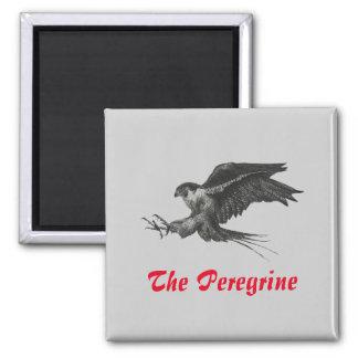Fridge Magnet Peregrine Hawk pen and ink Drawing
