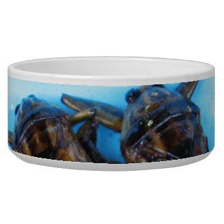 Fried Giant Water Bug (Maeng Daa) Bowl