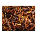 Fried Grasshopper (Takkataen Thot) Postcards