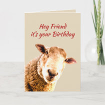Friend Birthday Funny Sheep Animal Humor Holiday Card