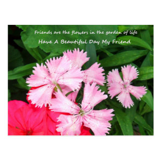 Friend Garden Postcard