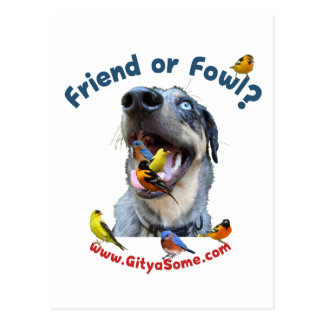 Friend or Fowl Bird Dog Postcard