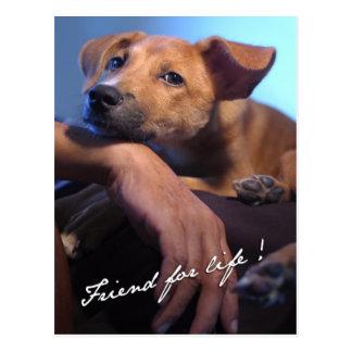 FriendForLife Postcard