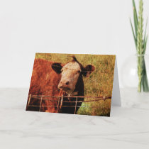 Friendly Cow, Father's Day Card
