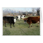 friendly cows greeting cards