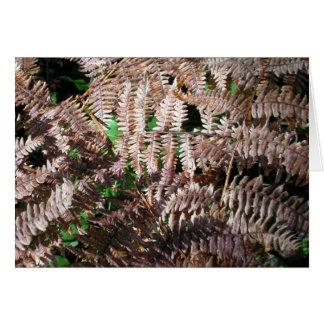 Friendly Fall Ferns Cards