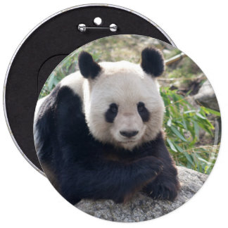 Friendly Giant Panda Button