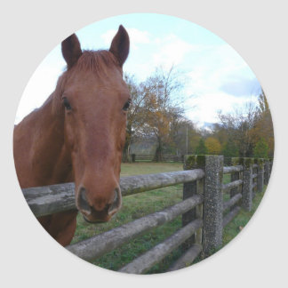 Friendly Horse by the Fence Sticker