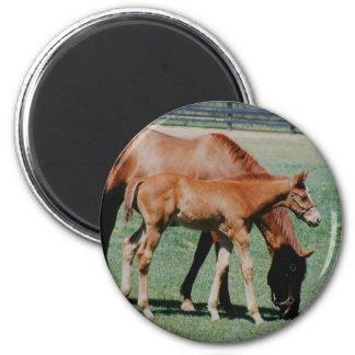 FRIENDLY HORSES REFRIGERATOR MAGNETS