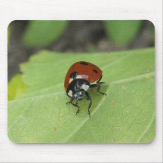 Friendly Ladybug Mouse Pad