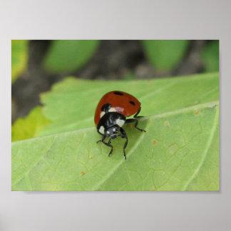 Friendly Ladybug Poster