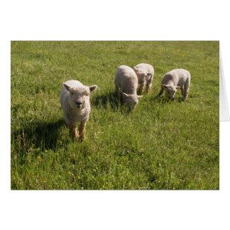 Friendly Lamb Greeting Card
