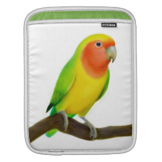 Friendly Lutino Lovebird Rickshaw Sleeve