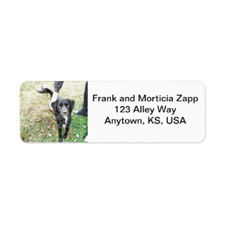 Friendly Mutt Poses for Camera Address Labels