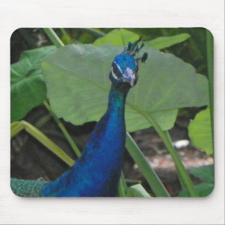 FRIENDLY PEACOCK Mouse Pad
