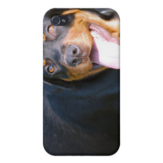 Friendly Rottie iPhone Case iPhone 4 Case