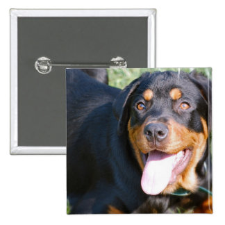 Friendly Rottweiler  Pin