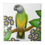 Friendly Senegal Parrot Tile