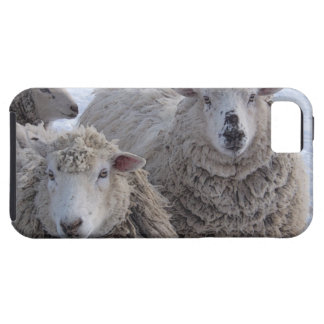 Friendly Sheep iPhone SE/5/5s Case