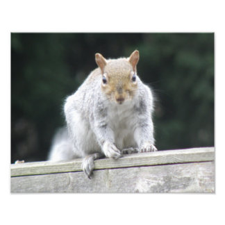 Friendly Squirrel Photo Print