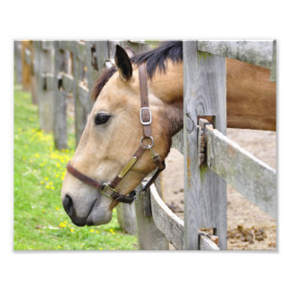 Friendly Tan Horse Art Photo