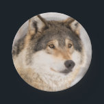 "Friendly Wolf smiling paper plates<br><div class=""desc"">Photo of a wolf head. A friendly looking wolf with a smile on it&#39;s face.  It&#39;s winter with a white snowy backdrop. Matching paper napkins for birthday parties available.</div>"