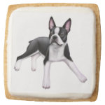 Friendly Young Boston Terrier Dog Cookie Square Premium Shortbread Cookie